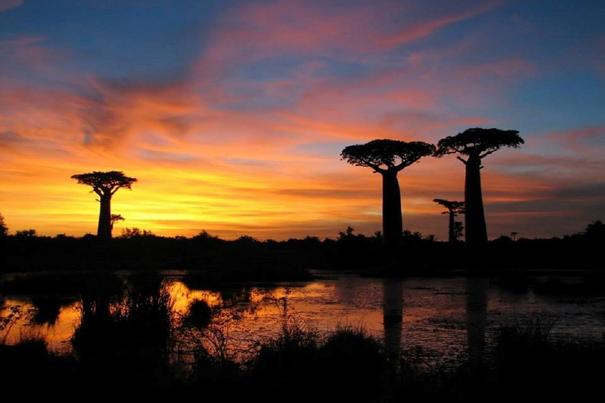 Allee des baobabs coucher de soleil