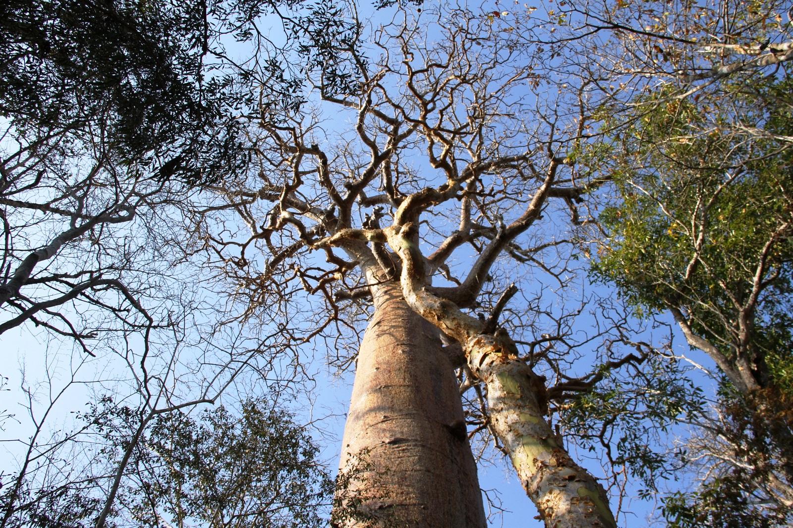 LA RESERVE FORESTIERE DE KIRINDY