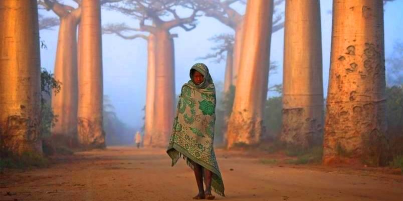 Allee des baobabs 1