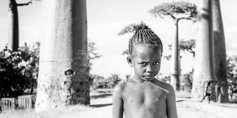 Allee des baobabs par frederic cottel 7