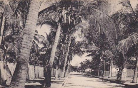 Avenue principale