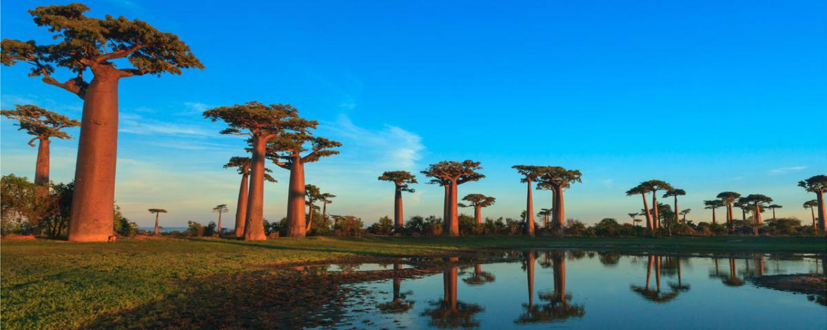allee baobab