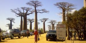 Inauguration travaux allee des baobabs 3
