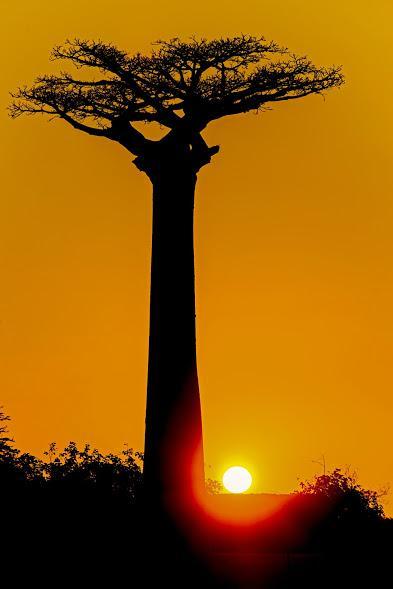 L allee des baobabs 1