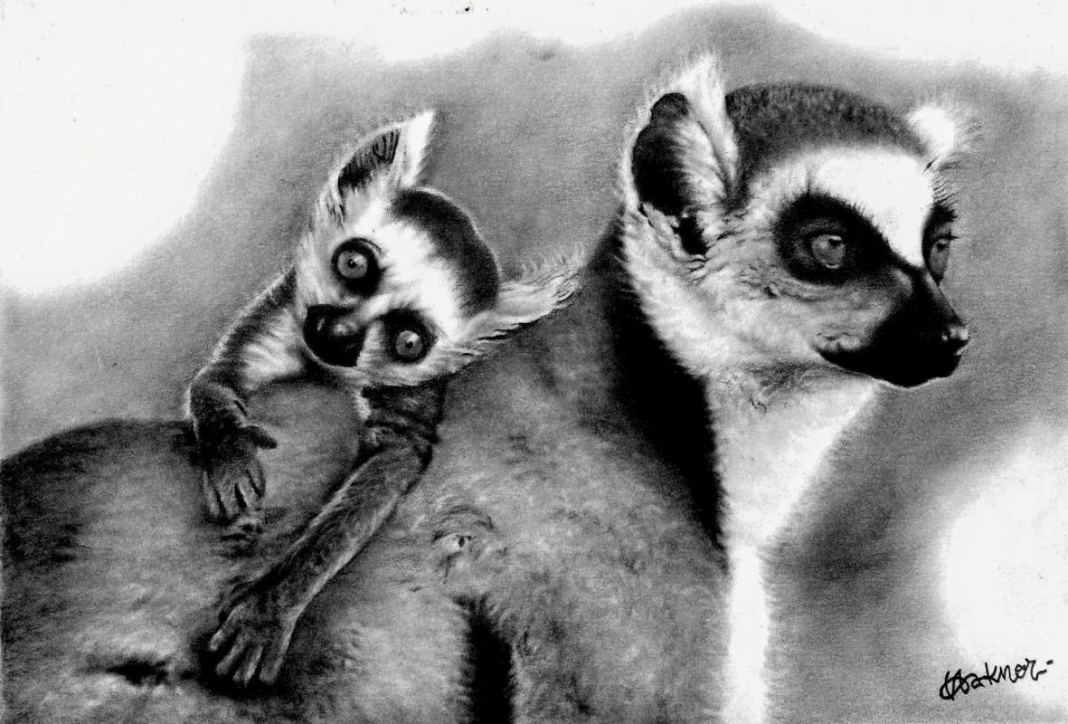 Lemurien au crayon 2018