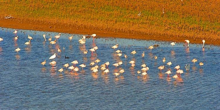 Les faunes de la reserve kirindy