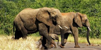 Park kruger afrique du sud